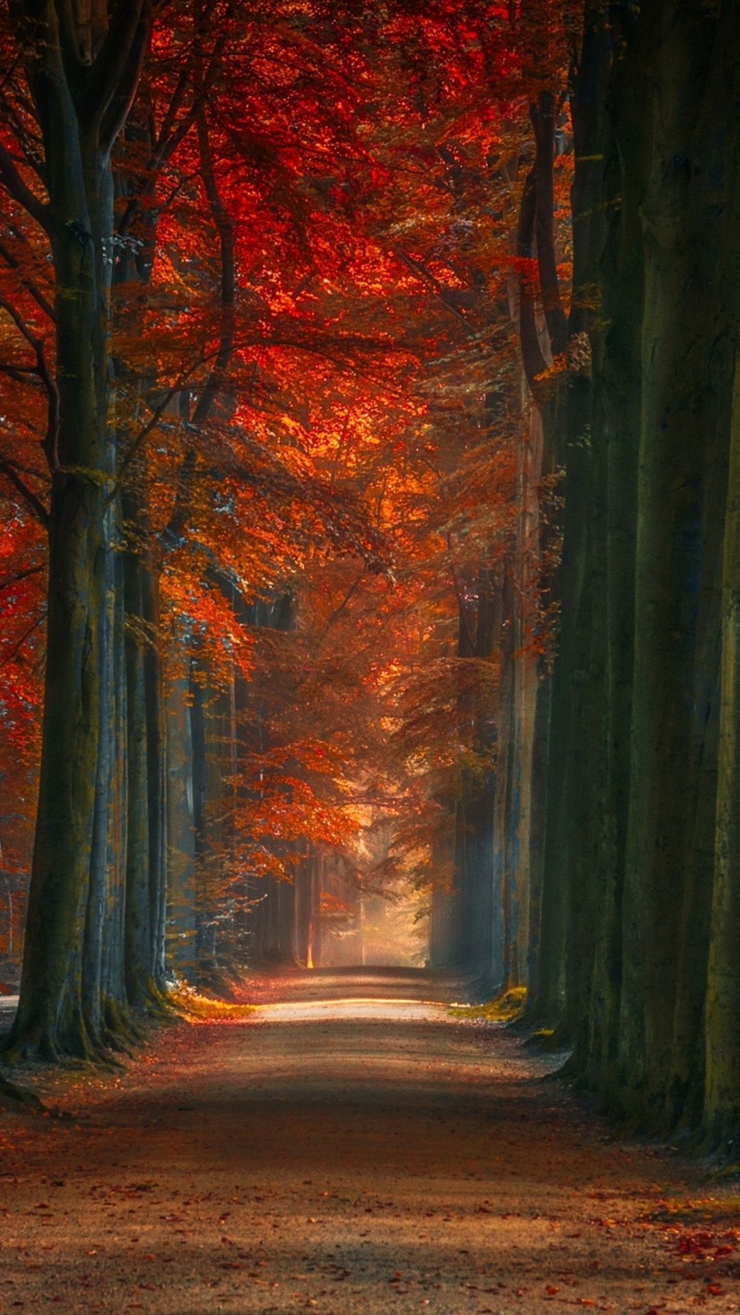 Wallpapers Autumn Forest