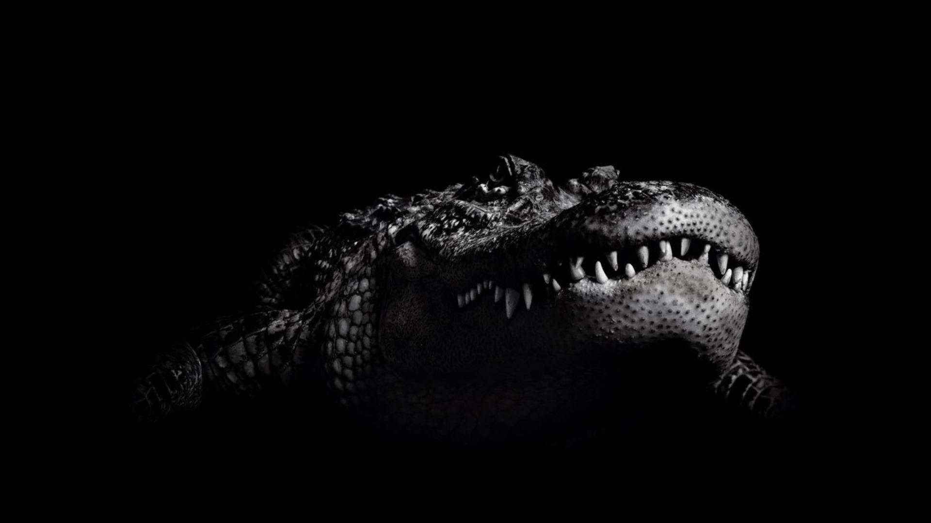 Wallpapers Black Crocodile