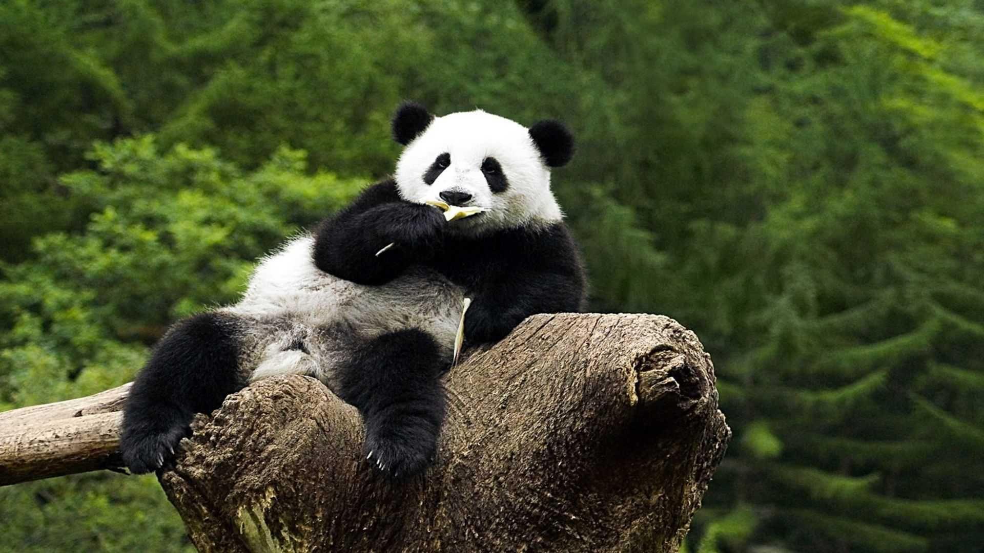 Wallpapers On Desktop Panda