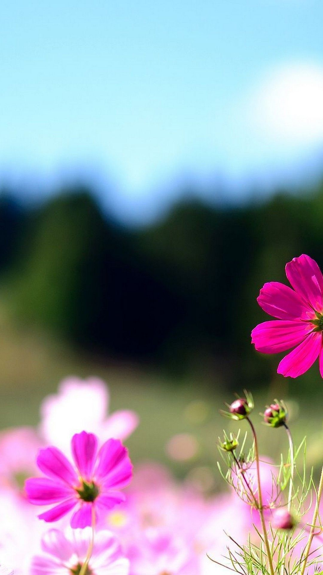 Wallpapers Summer Nature Flowers