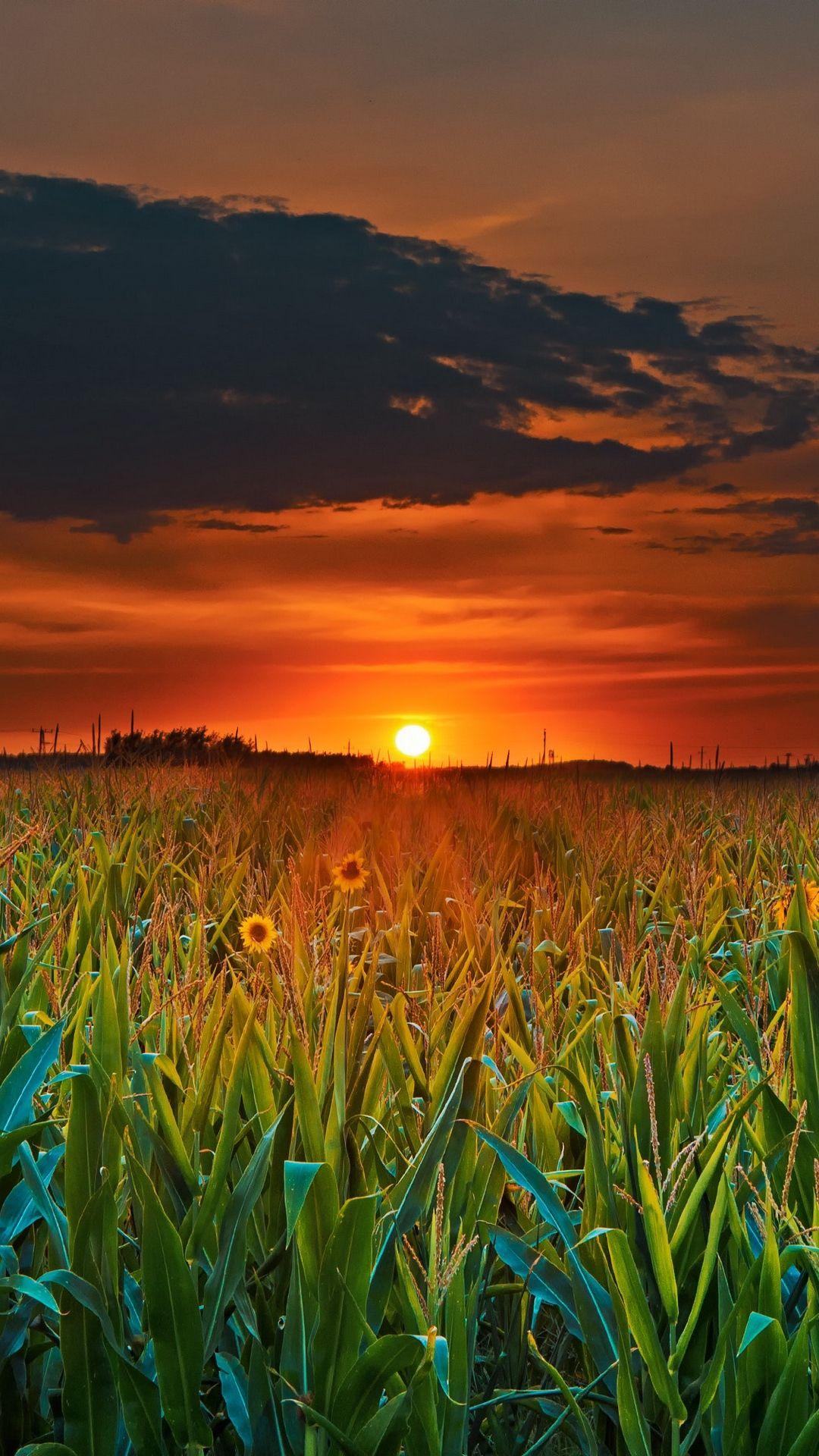 Wallpapers Sunset Field