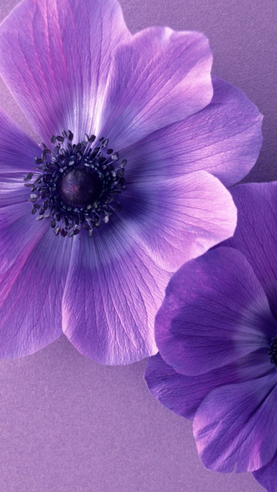 Wallpapers To Mobile Flowers Purple