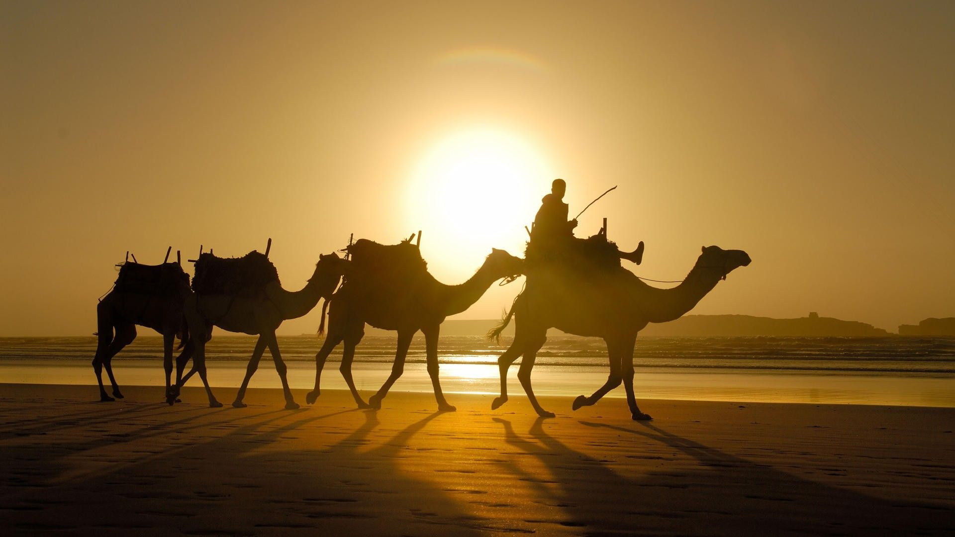 A Caravan Of Camels In The Desert Photo