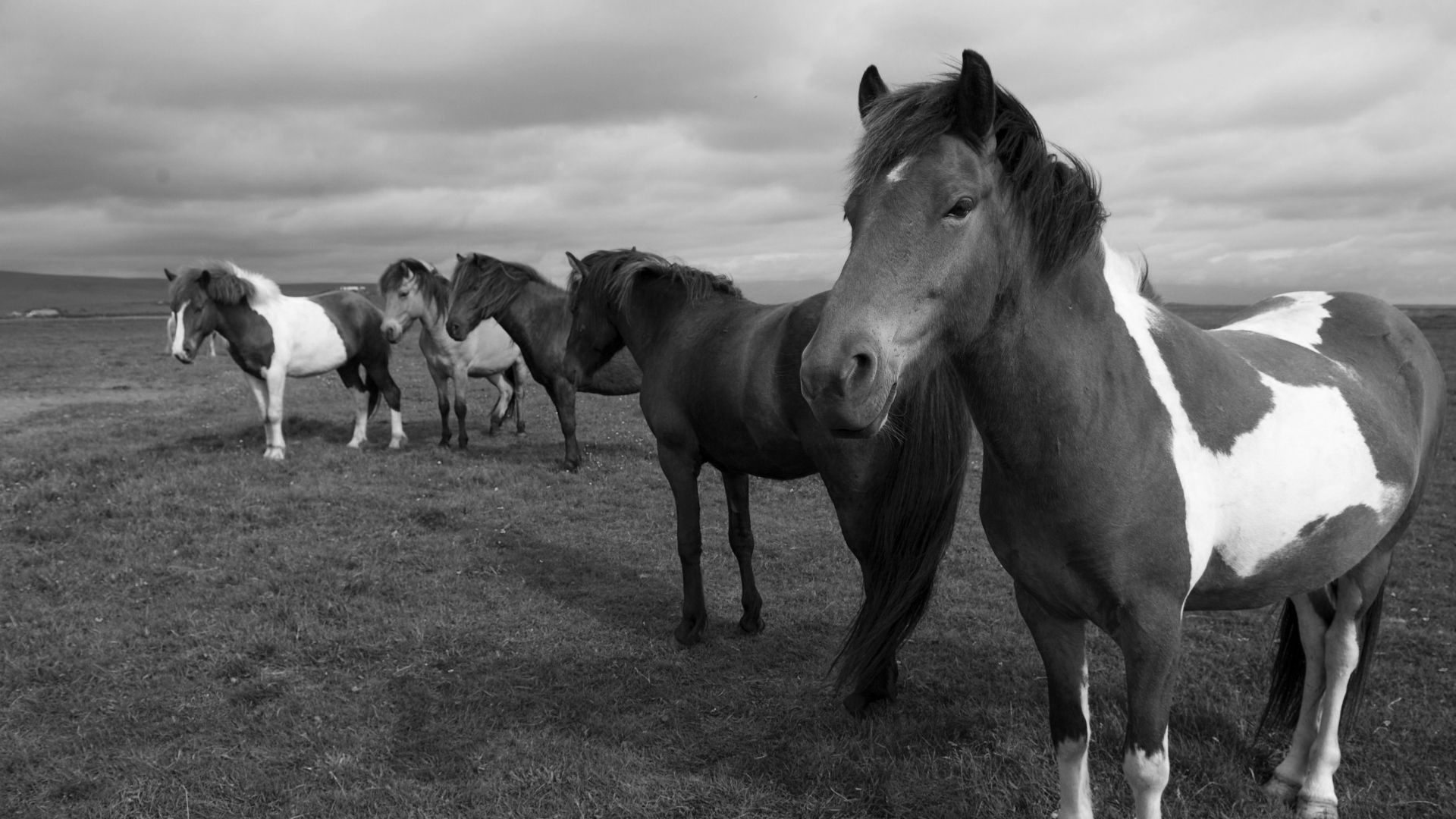 A Herd Of Horses Photo