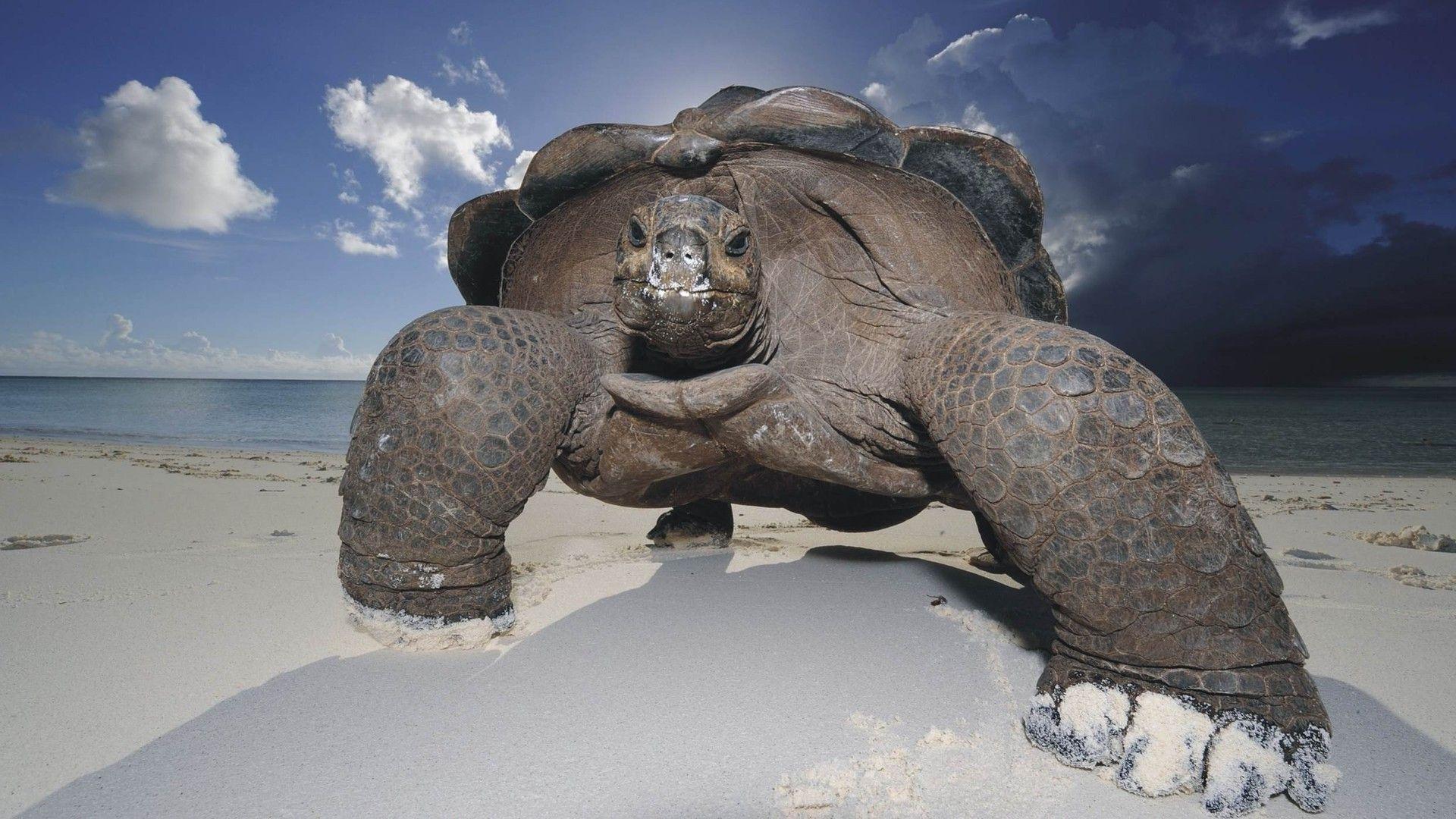 A Huge Turtle