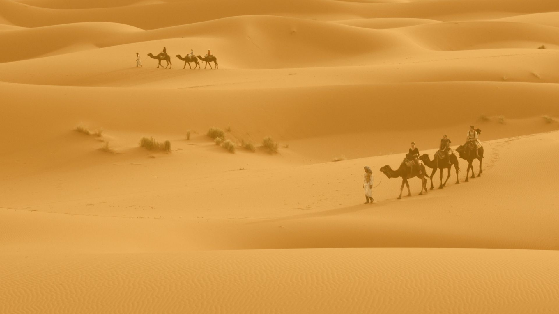 A Picture Of The Desert