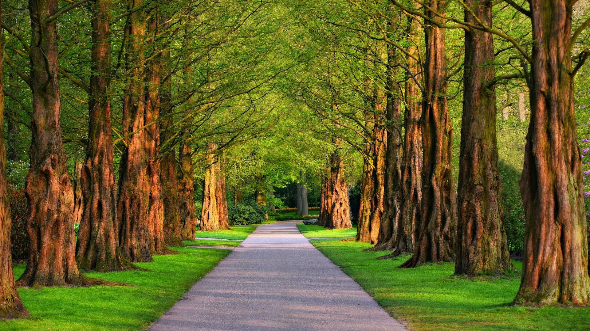 A Row Of Trees Photos 1