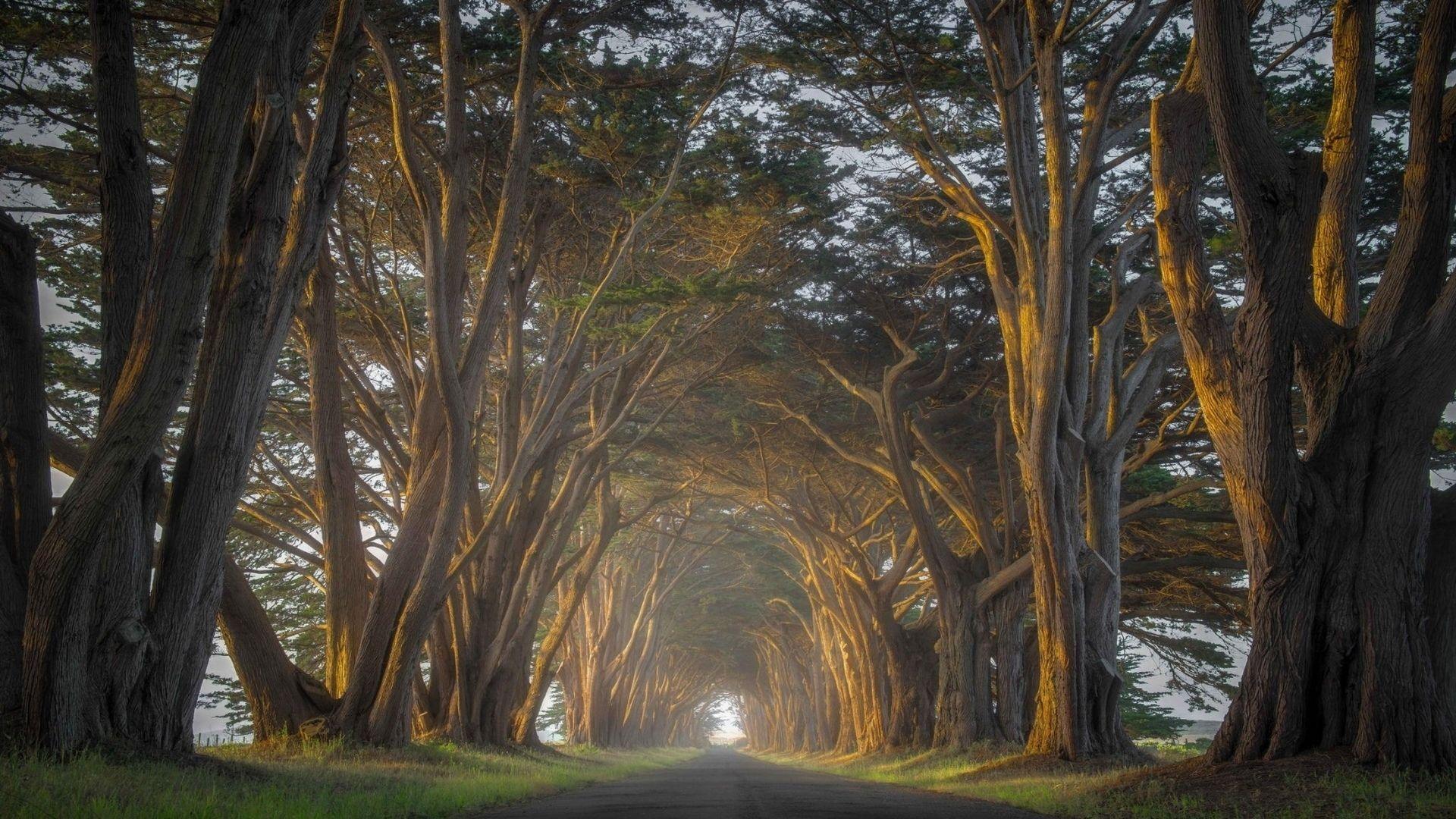 A Row Of Trees Photos 2