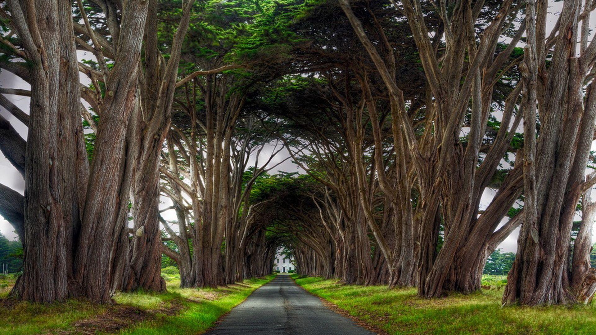 A Row Of Trees Photos