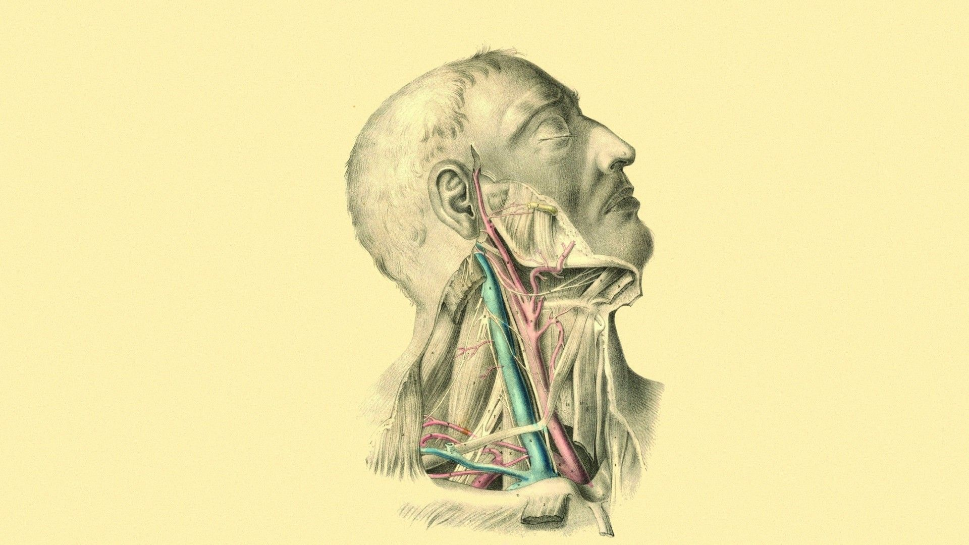 Anatomy Wallpaper Hd