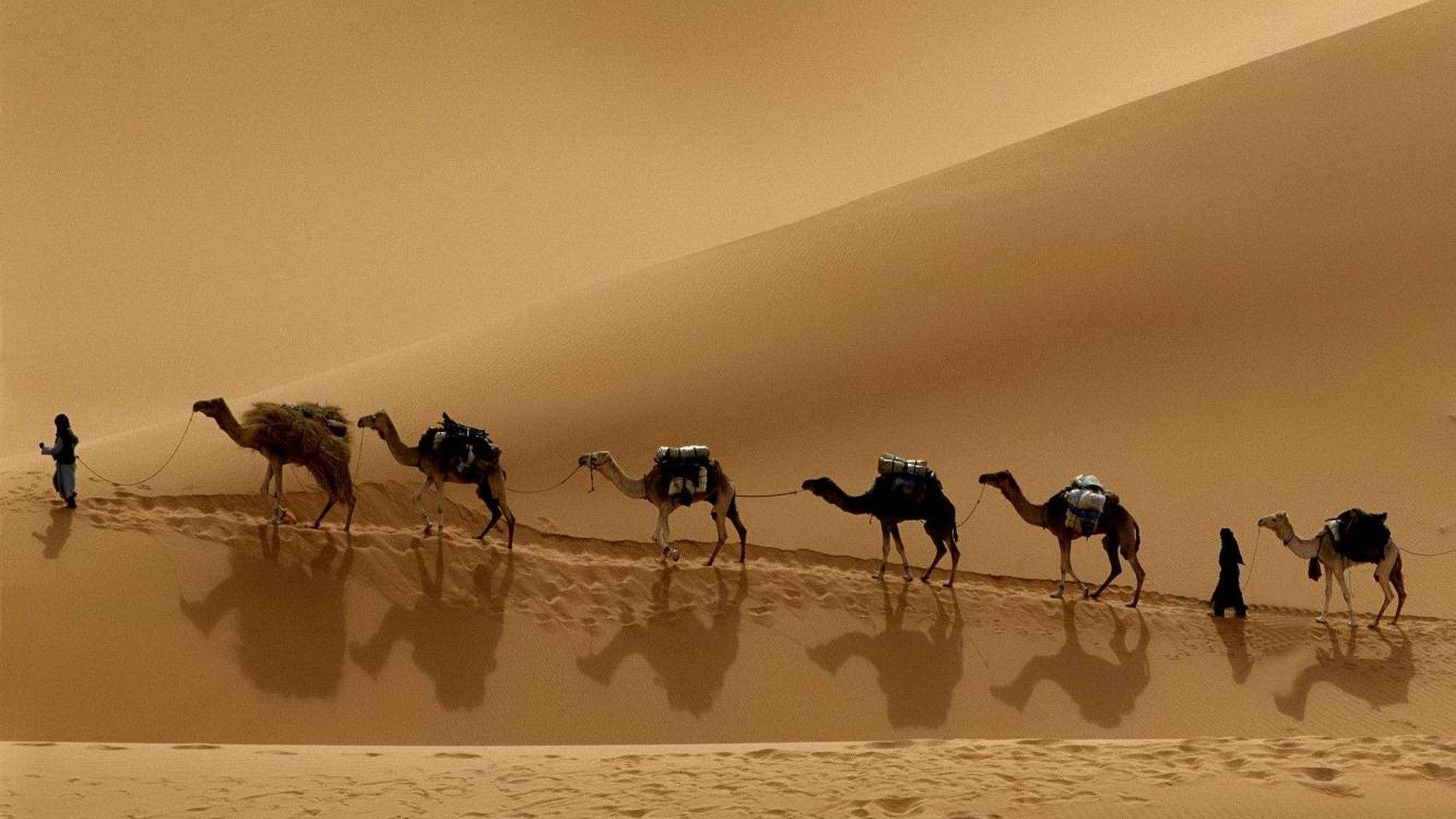 Ancient Photos In The Desert Caravan