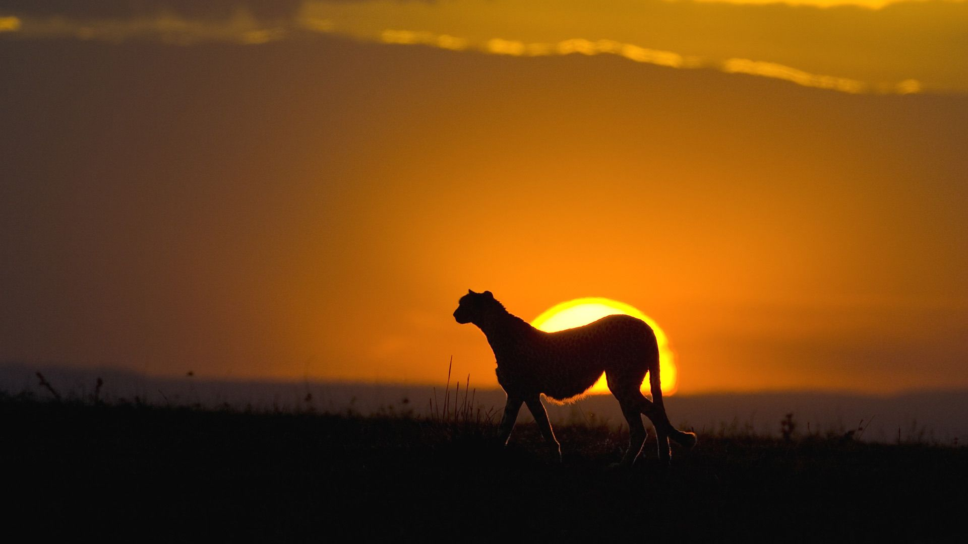 Animals At Sunset Pictures