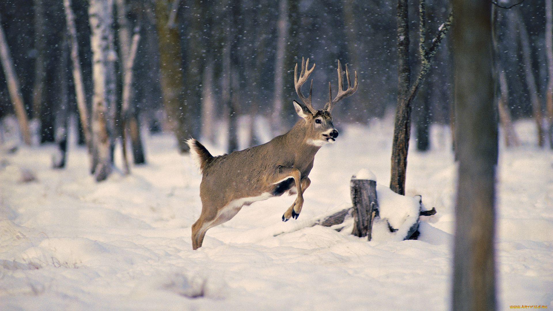 Animals In Winter Forest