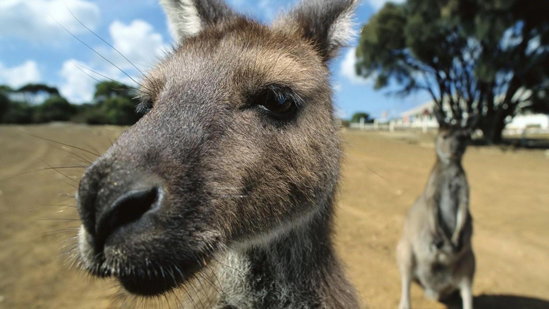 Animals Of Australia Pictures