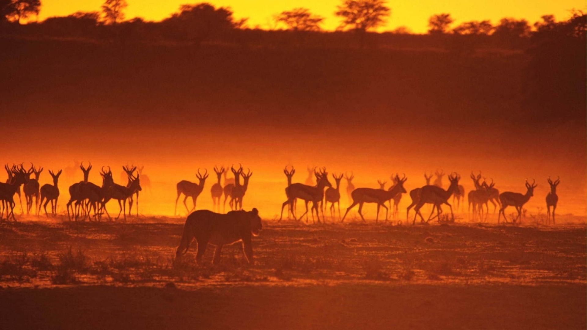Antelope Africa At Sunset