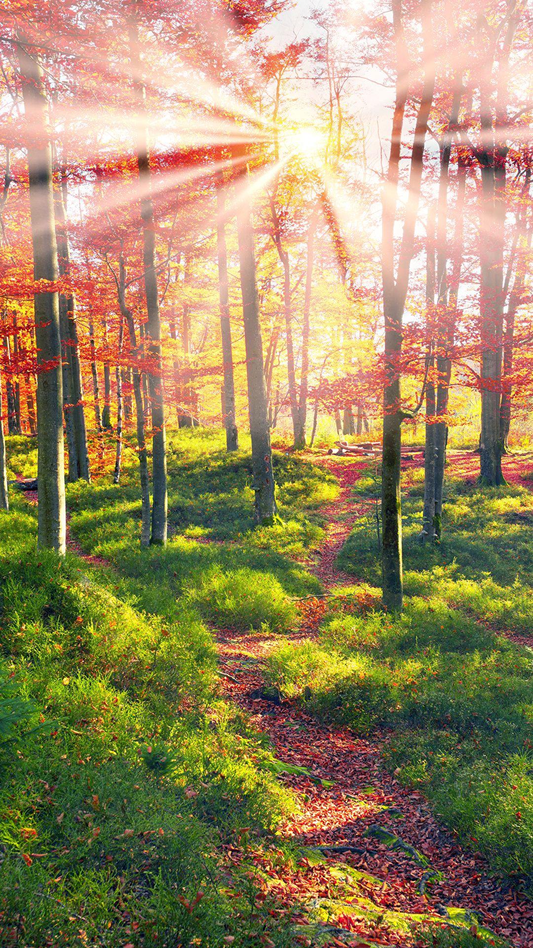 Autumn Forest Sun Pictures