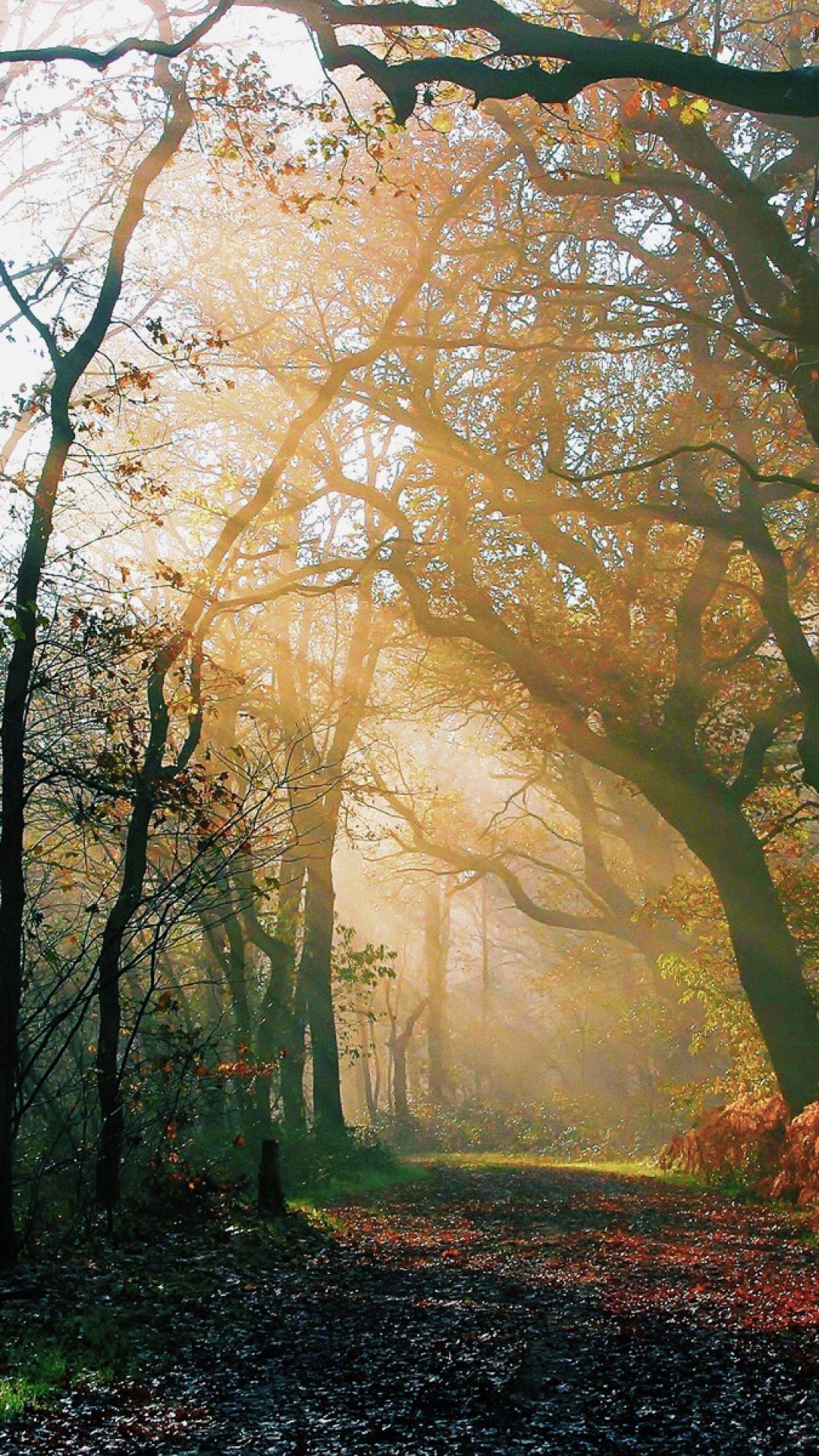 Autumn Forest Sun Vertical Picture