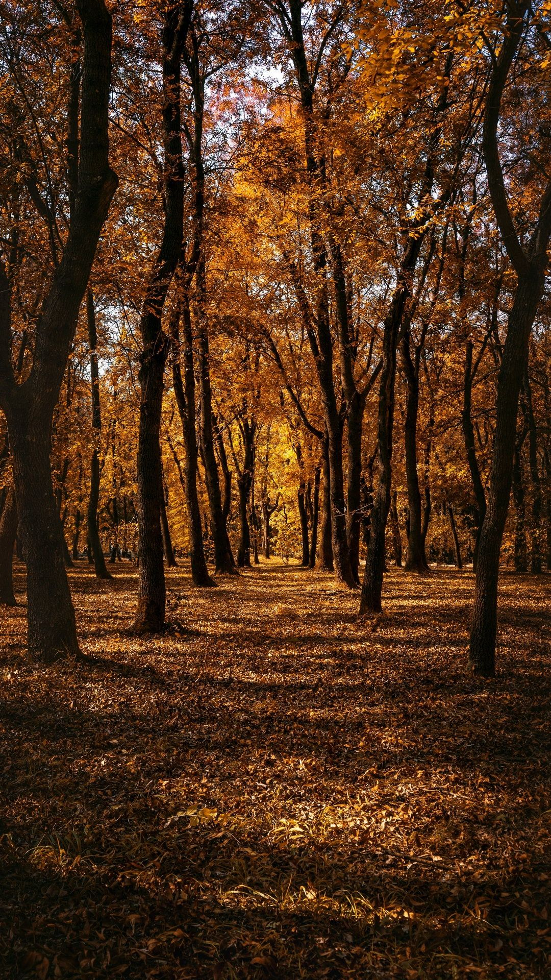 Autumn In The Forest Picture