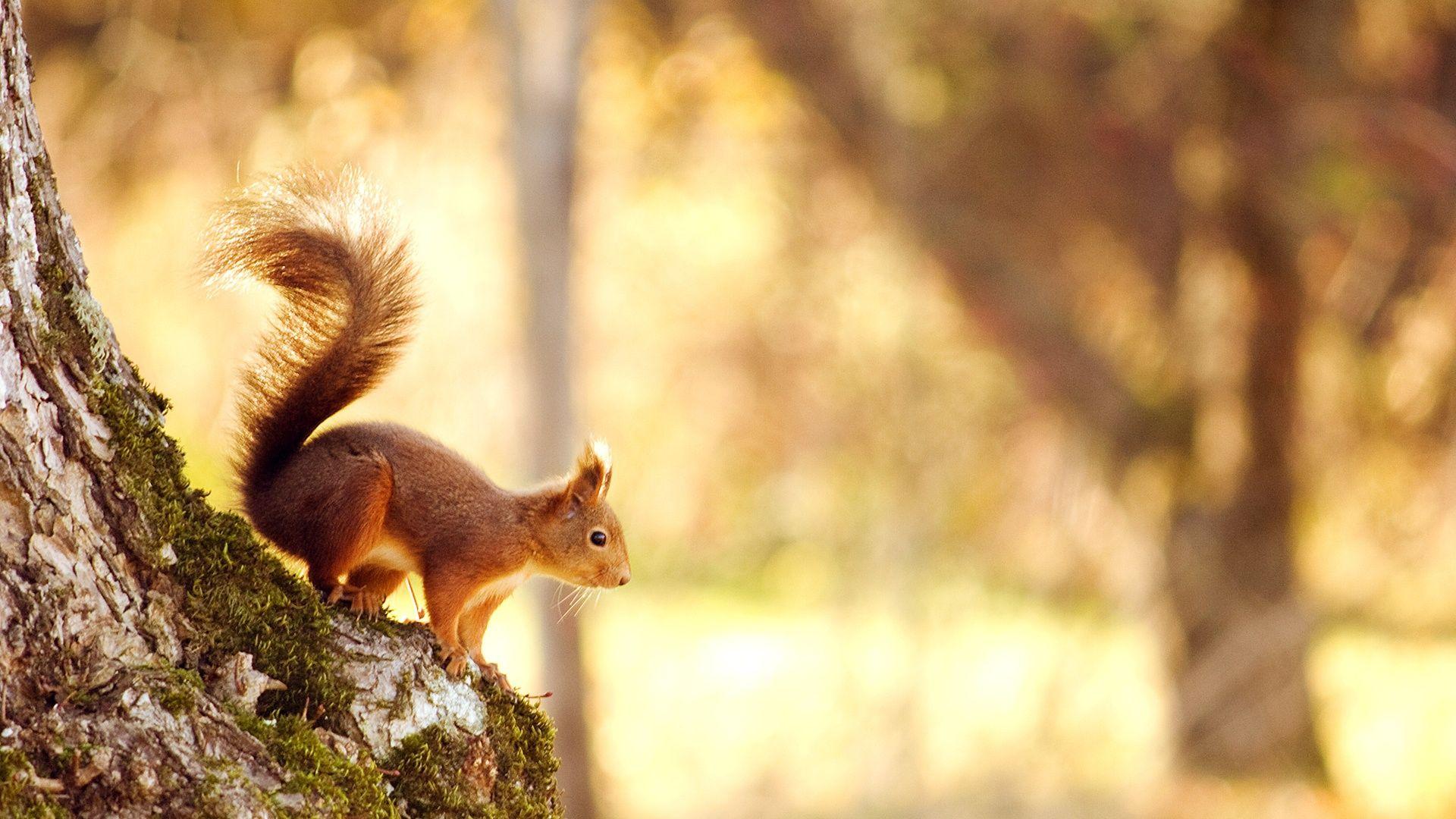 Autumn Nature Nuts Squirrel