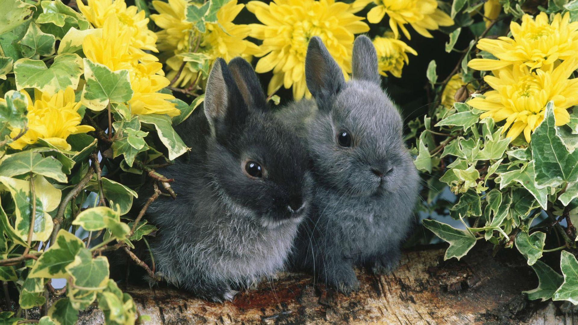 Baby Rabbits Photos