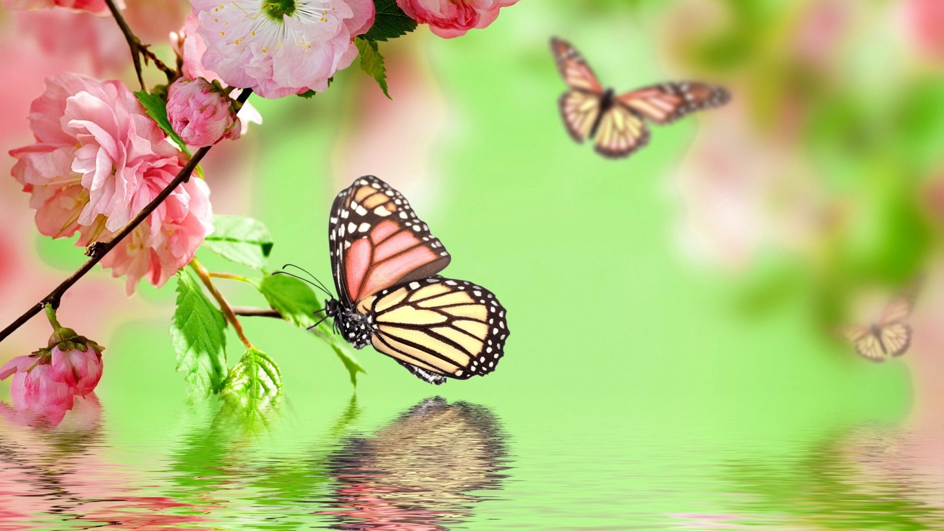 Background Flowers Butterfly