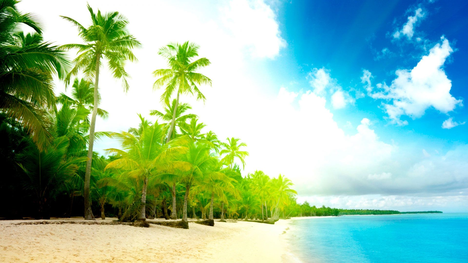 Background Sand Palm Trees