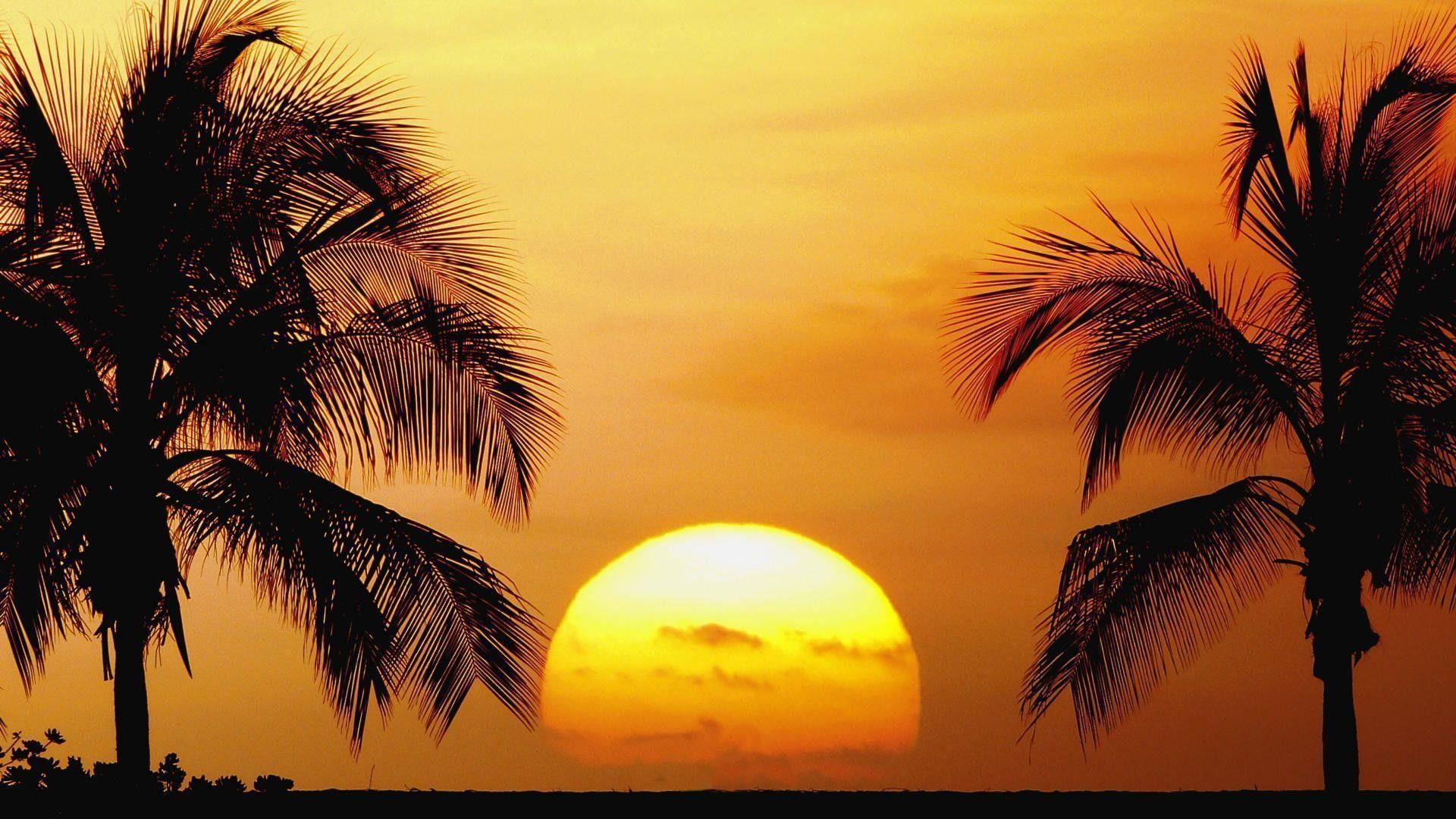 Background Sunset Palm Tree Picture