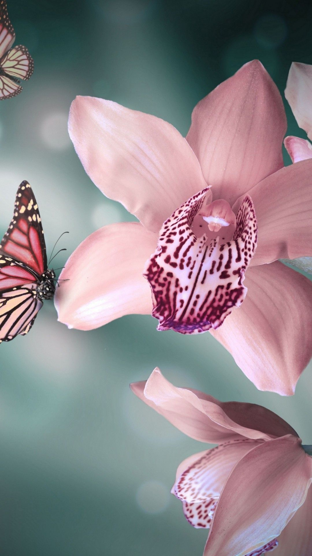 Background With Orchids And Butterflies