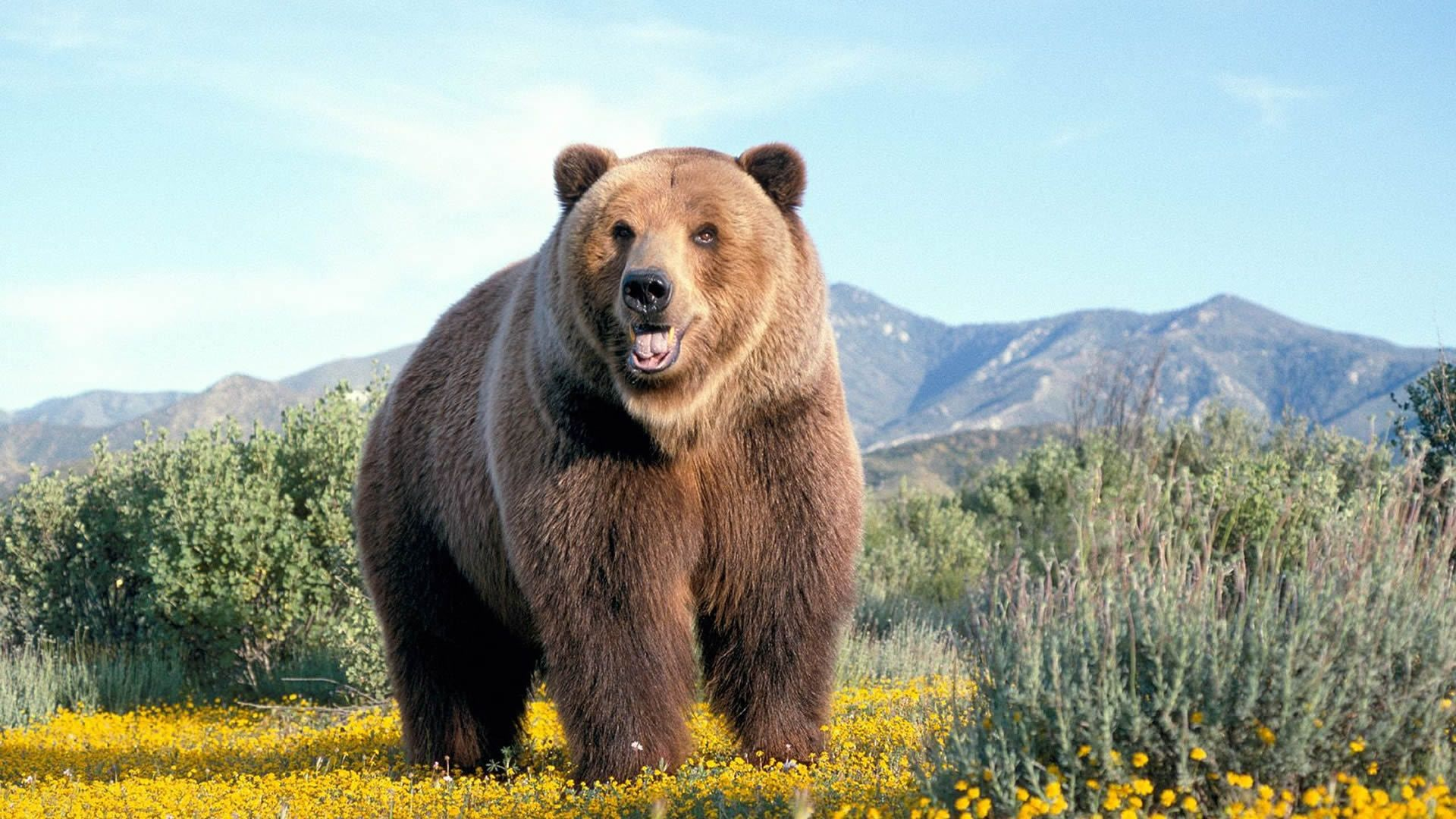 Bear Picture