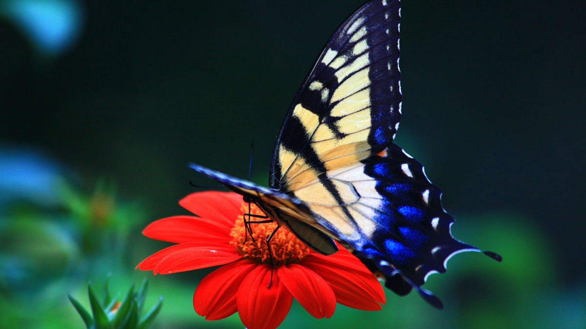 Beautiful Wallpapers Images Flowers And Butterflies