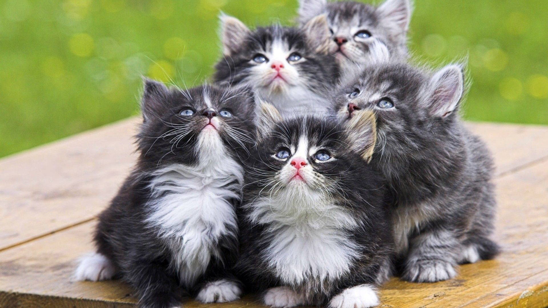 Beautiful Wallpapers Kittens