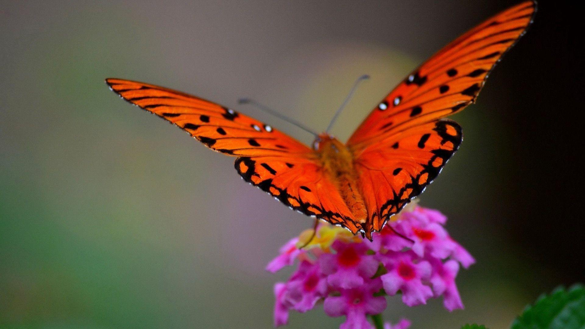 Beautiful Butterfly Macro