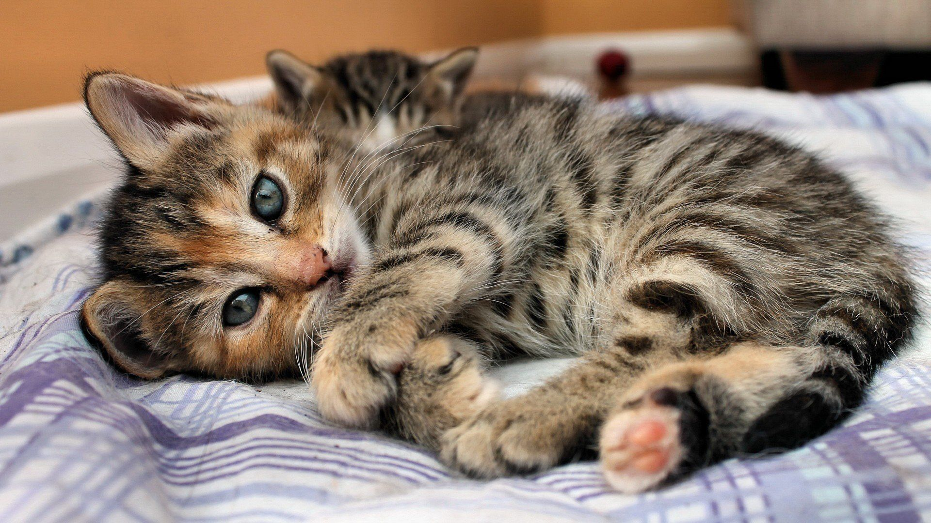 Beautiful Cats And Kittens Pictures