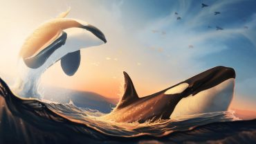 Beautiful Killer Whales