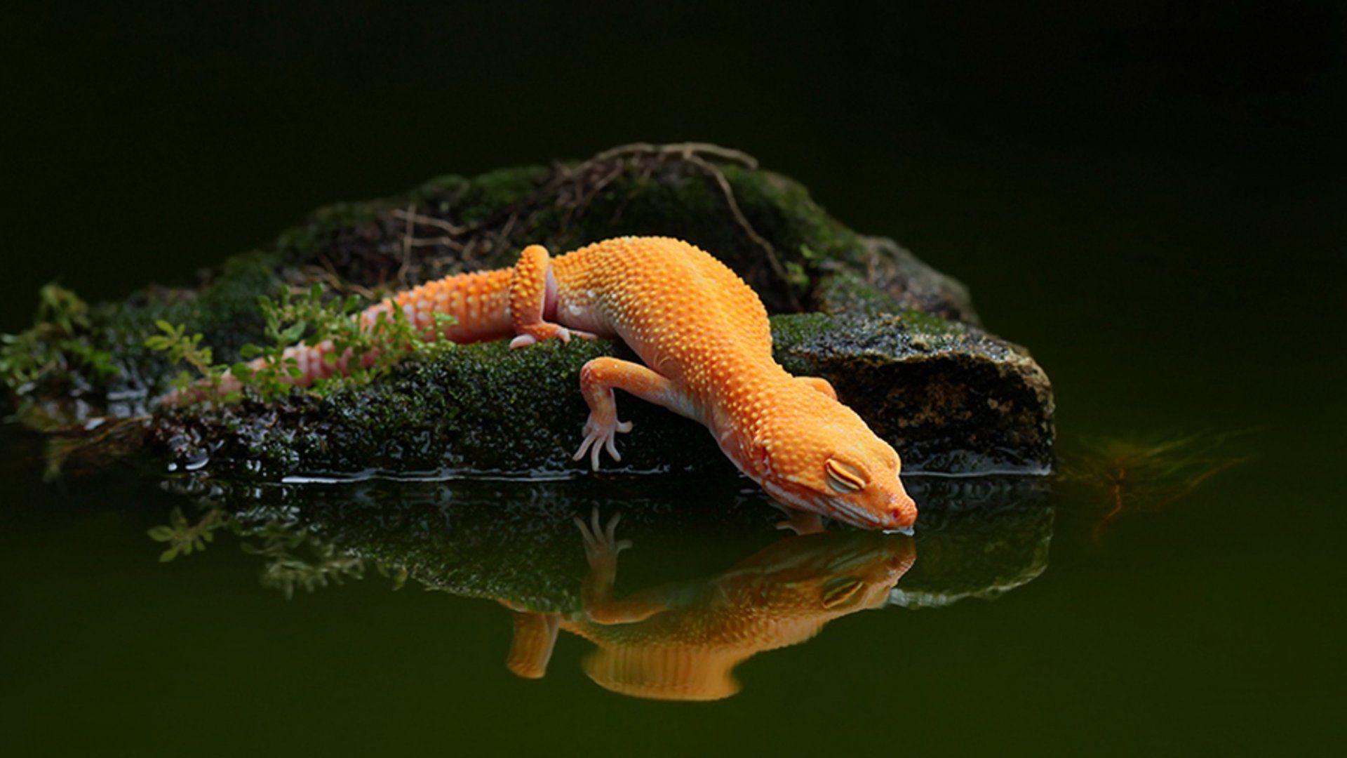 Beautiful Lizard Picture