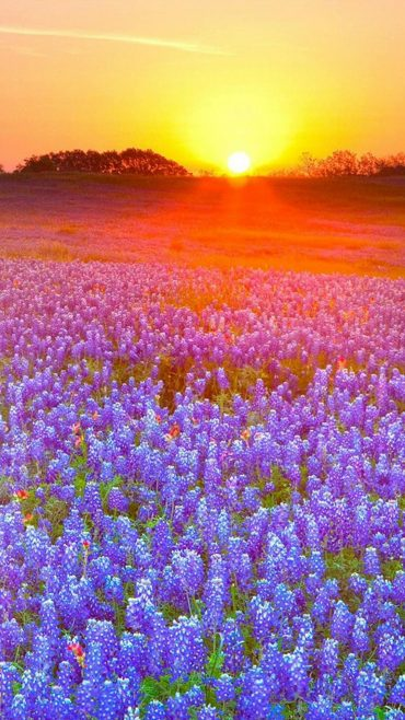 Beautiful Meadow Photos