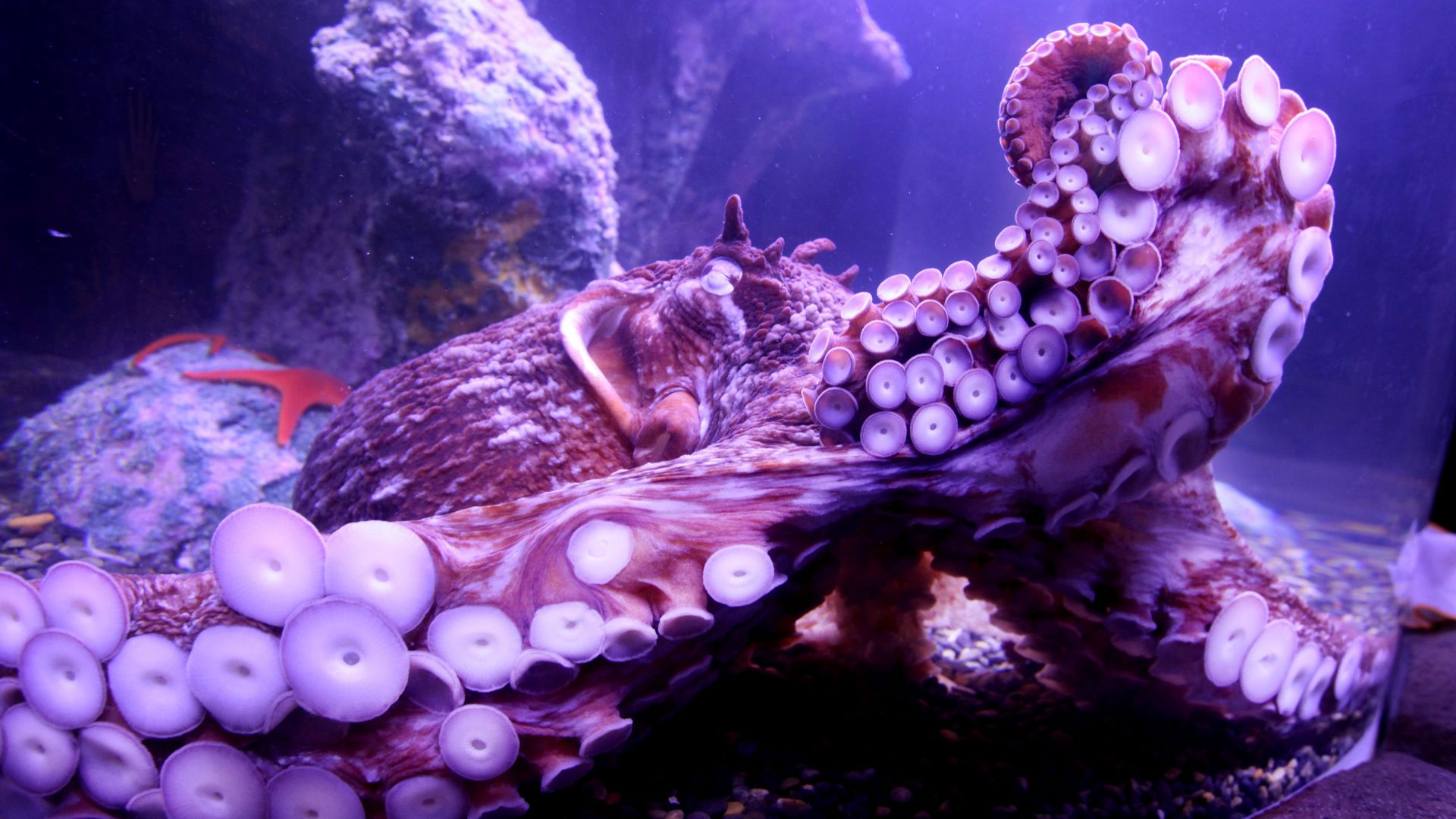 Beautiful Octopus Pictures