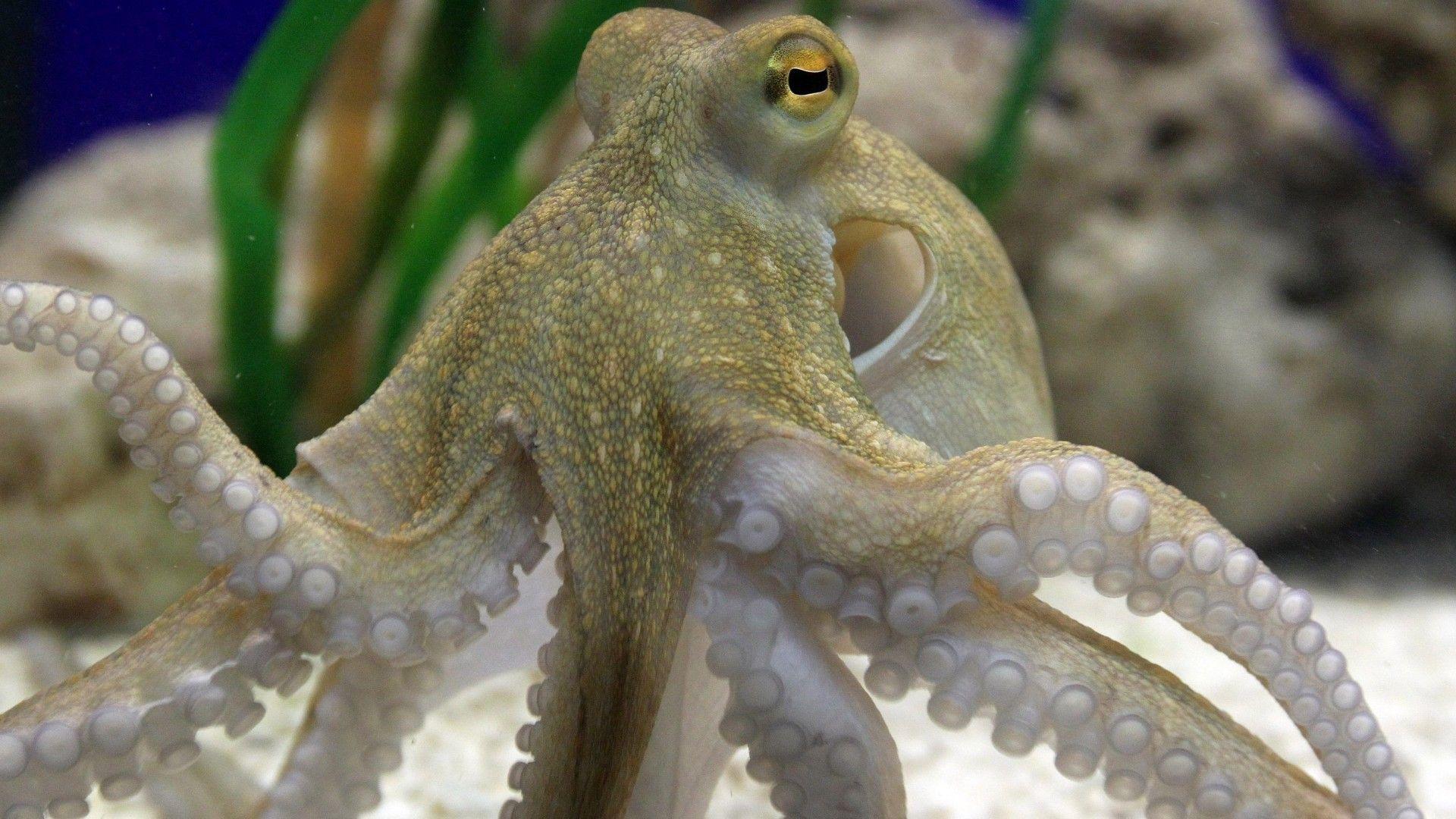 Beautiful Octopus