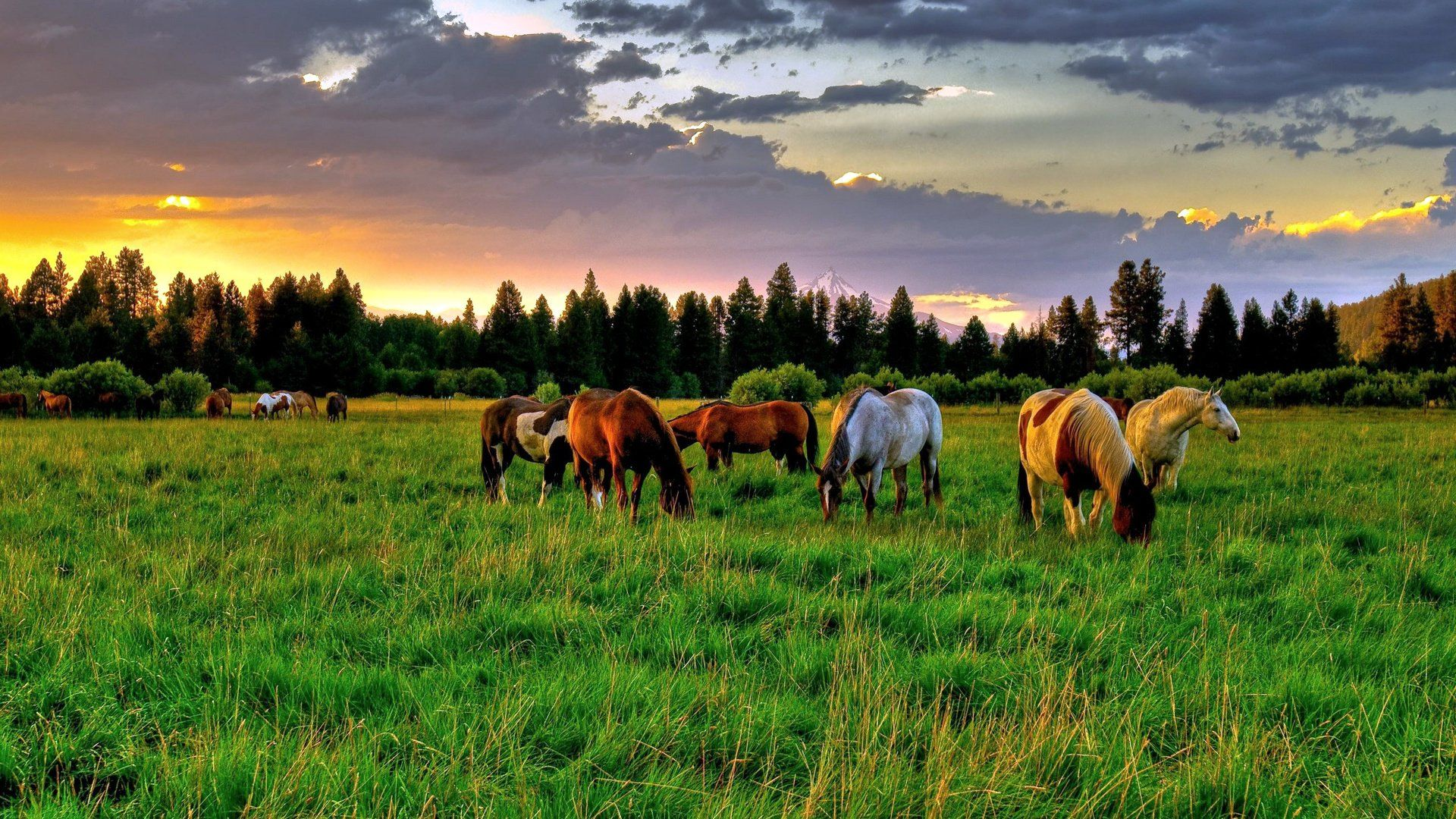 Beautiful Photo Of Horses In The Nature