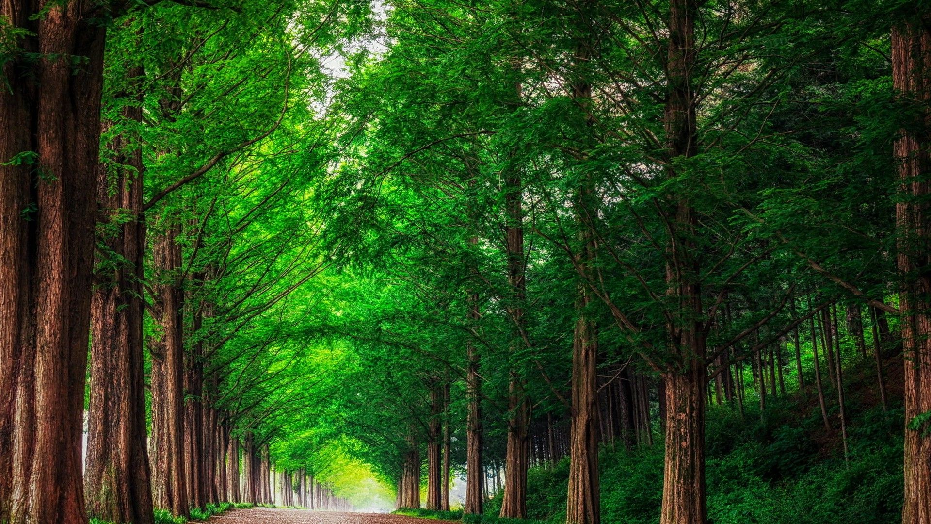 Beautiful Photo Of The Forest