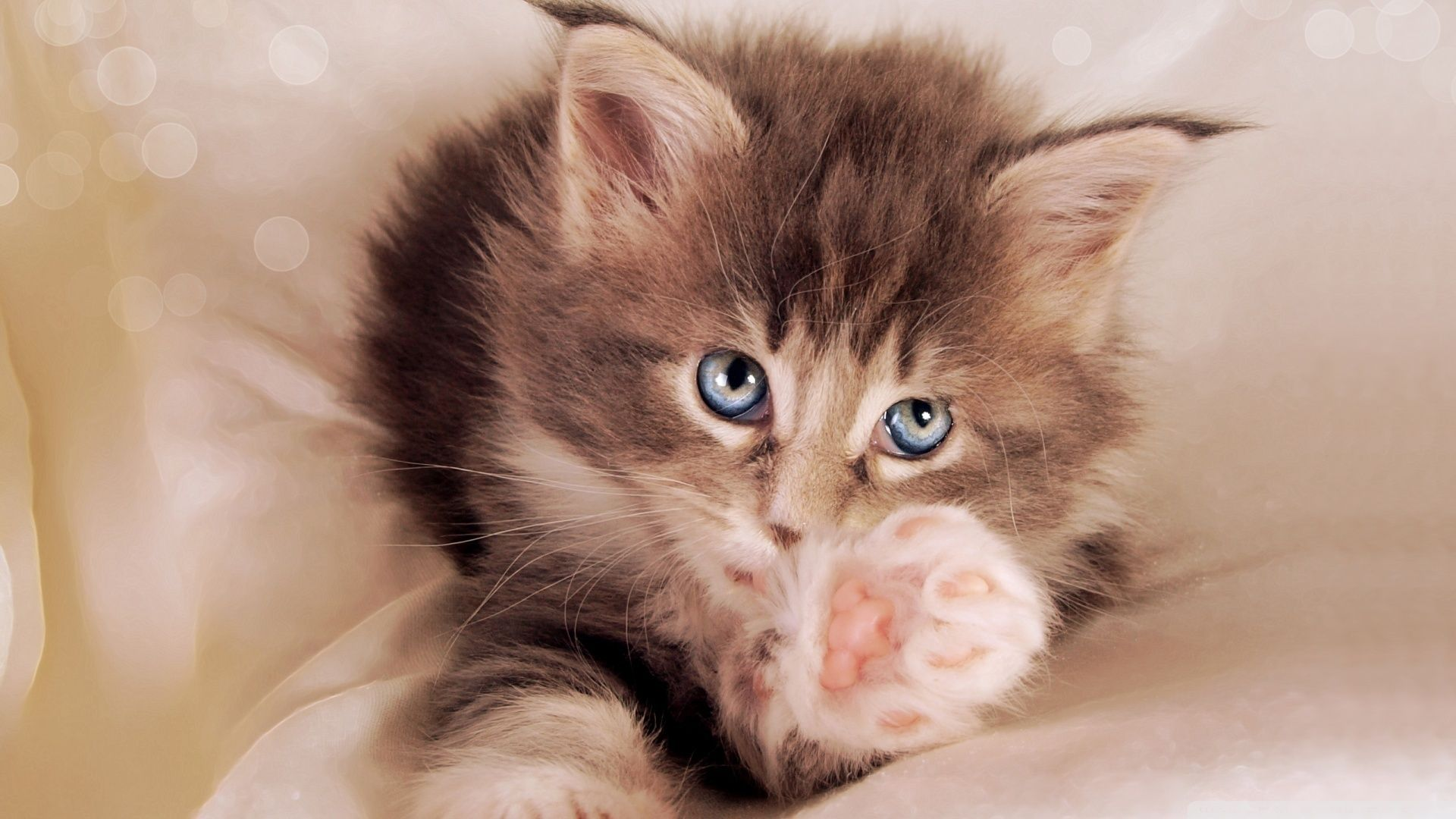 Beautiful Pictures Of Cute Kittens