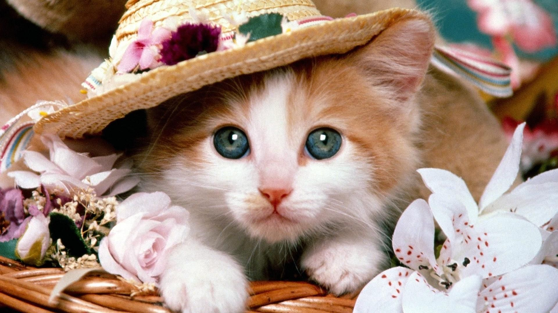 Beautiful Pictures Of Kittens