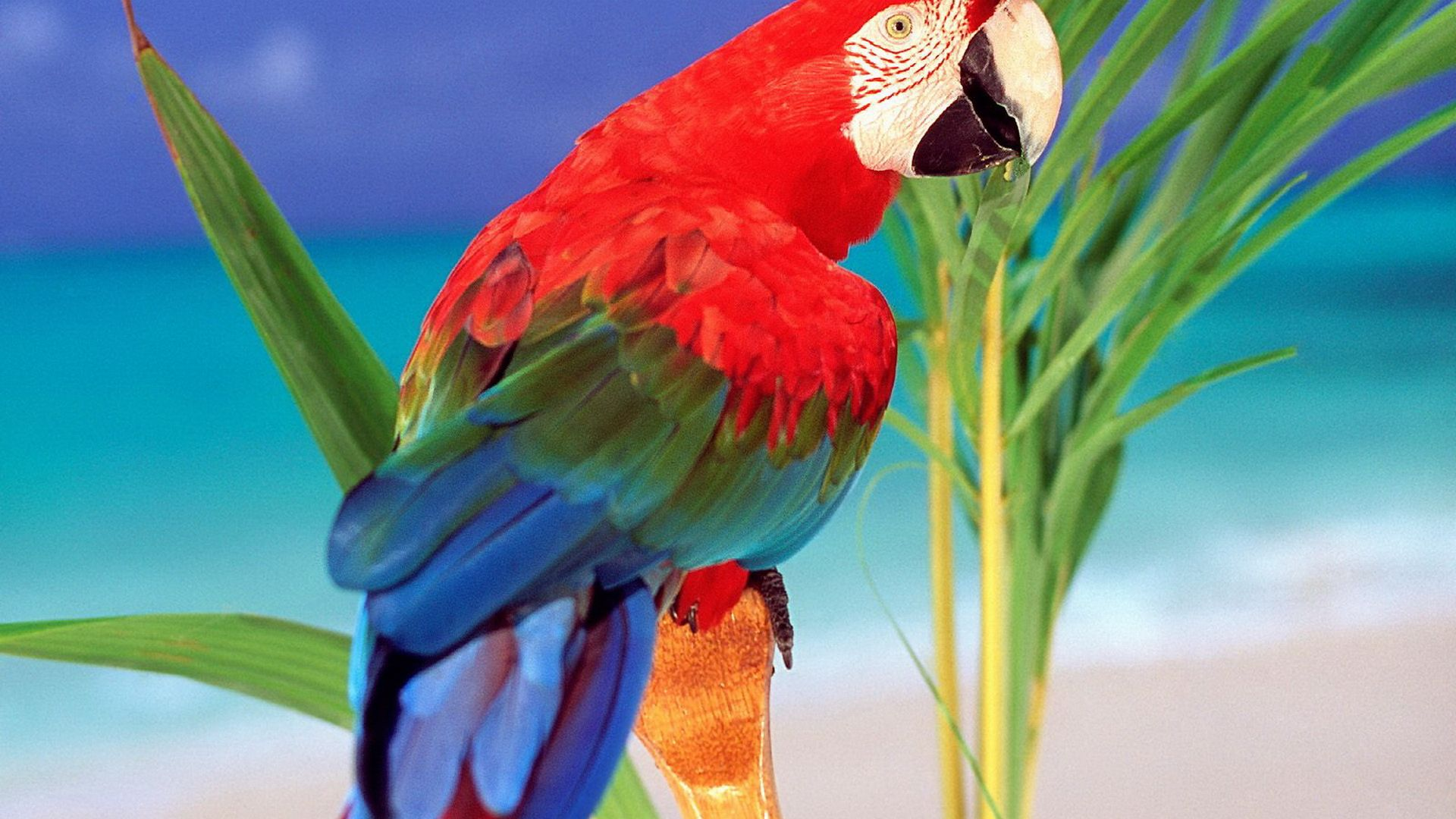 Beautiful Pictures Of Parrots