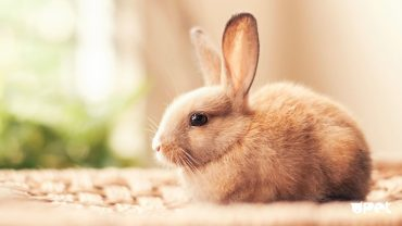 Beautiful Pictures Of Rabbits