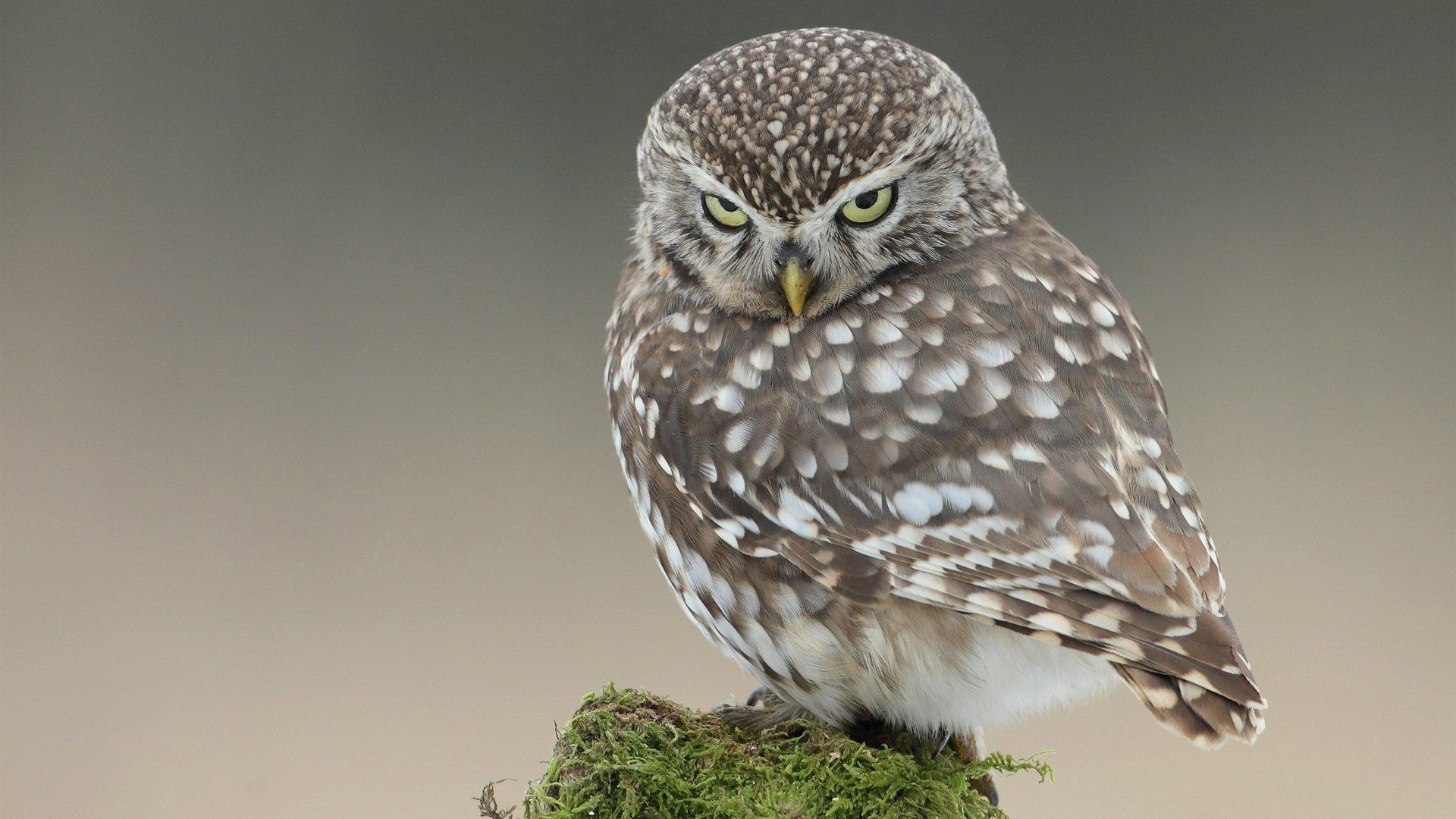 Beautiful Pictures Of The Owlets