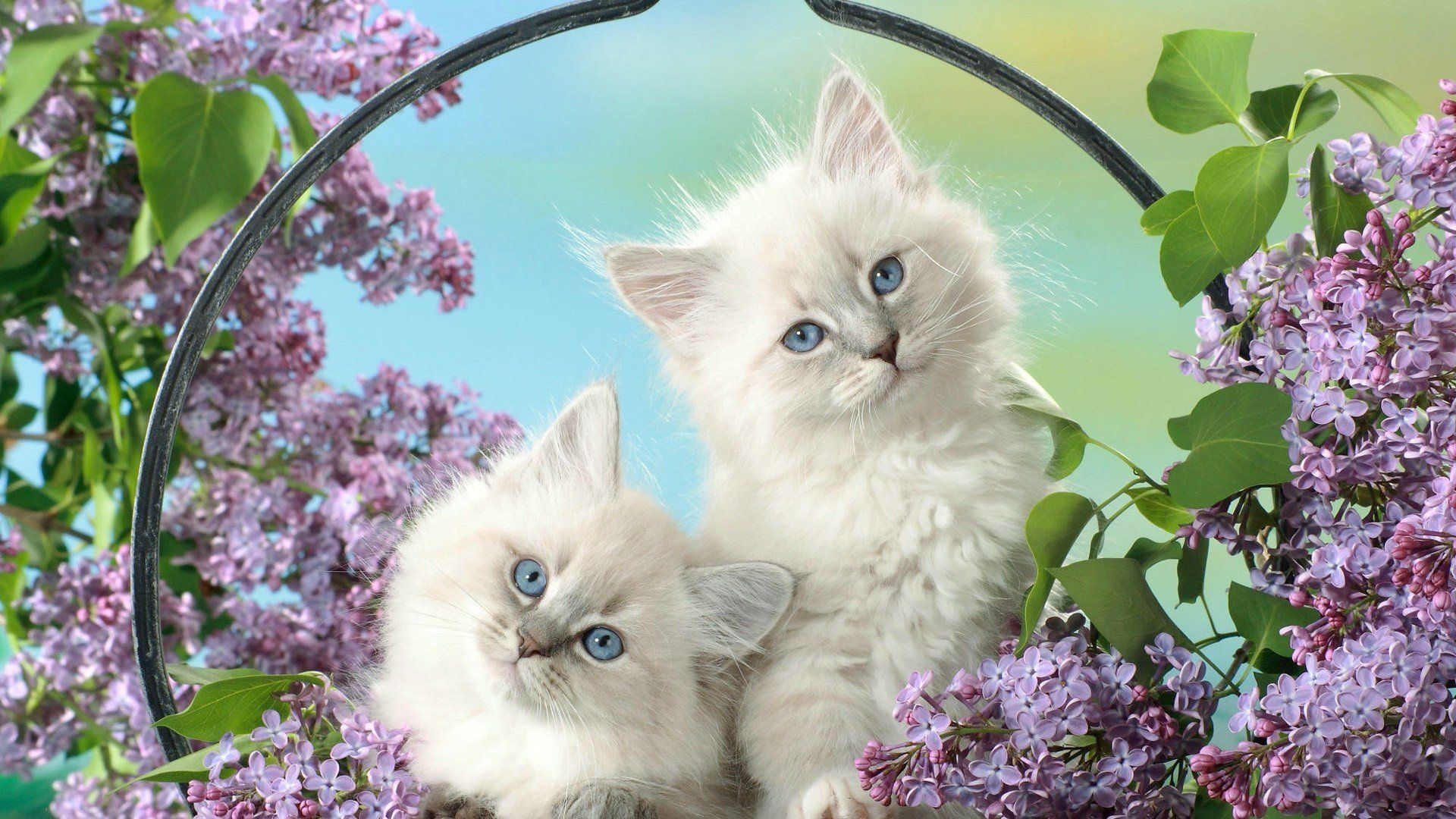 Beautiful Pictures On A Desktop Kittens