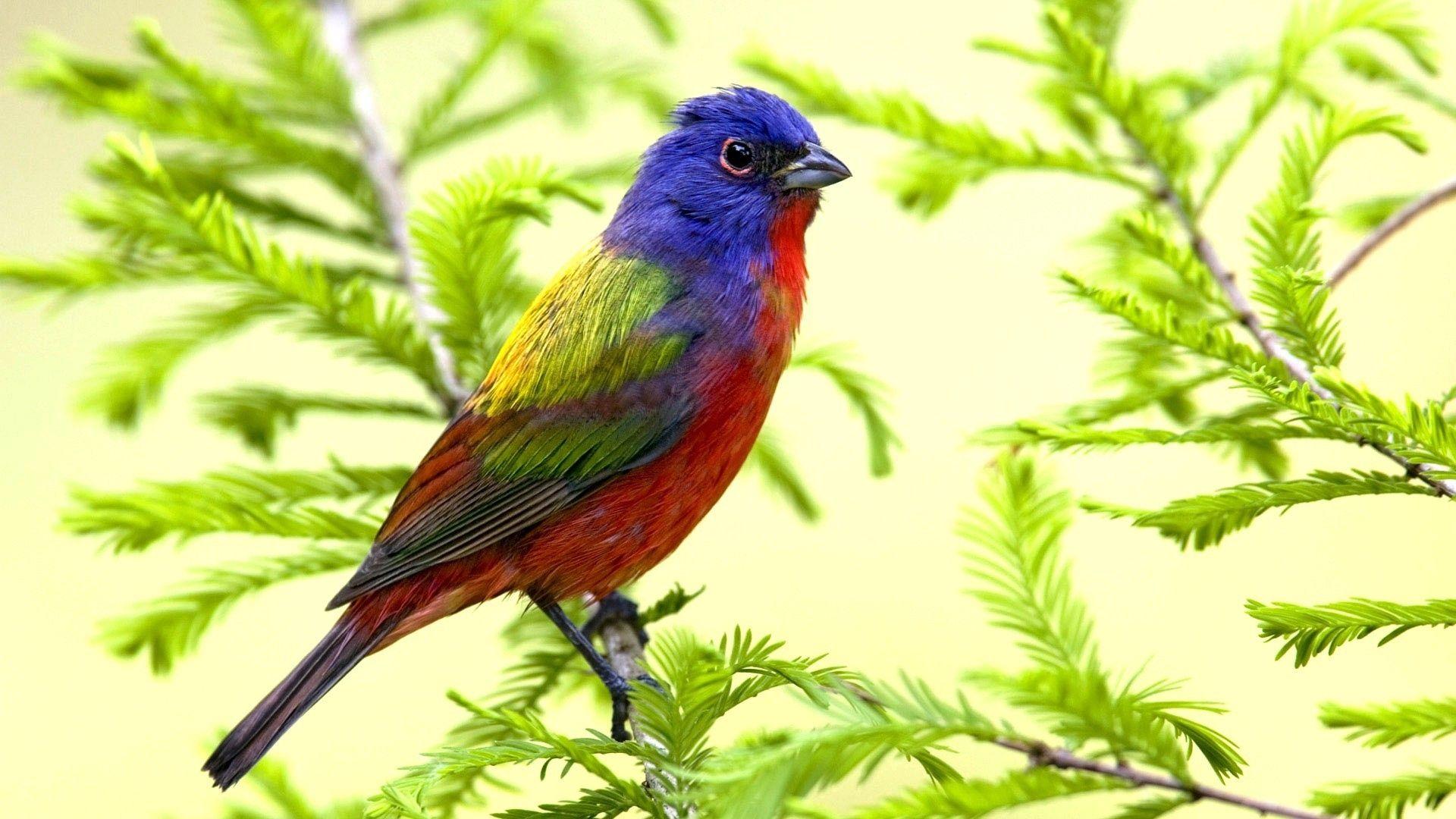 Beautiful Songbirds