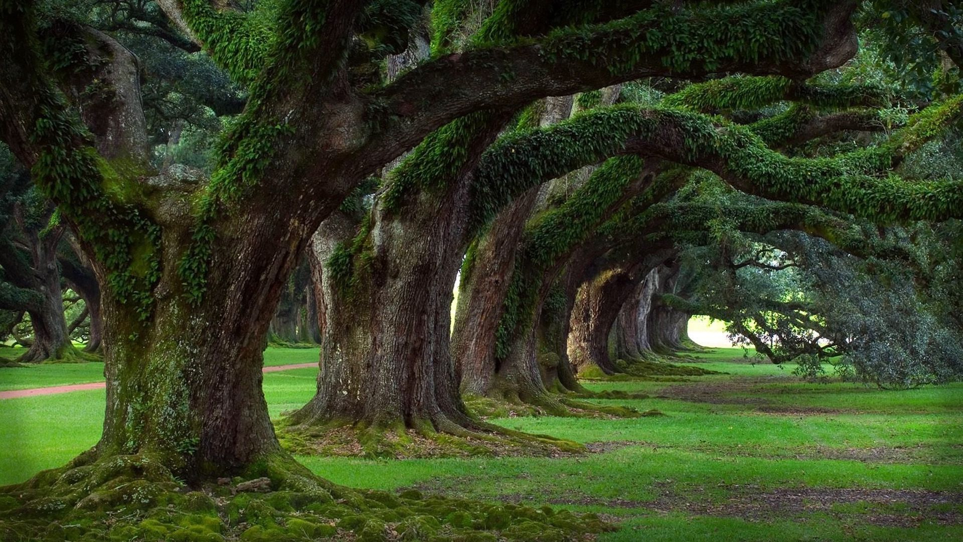 Beautiful Trees Pictures High Resolution