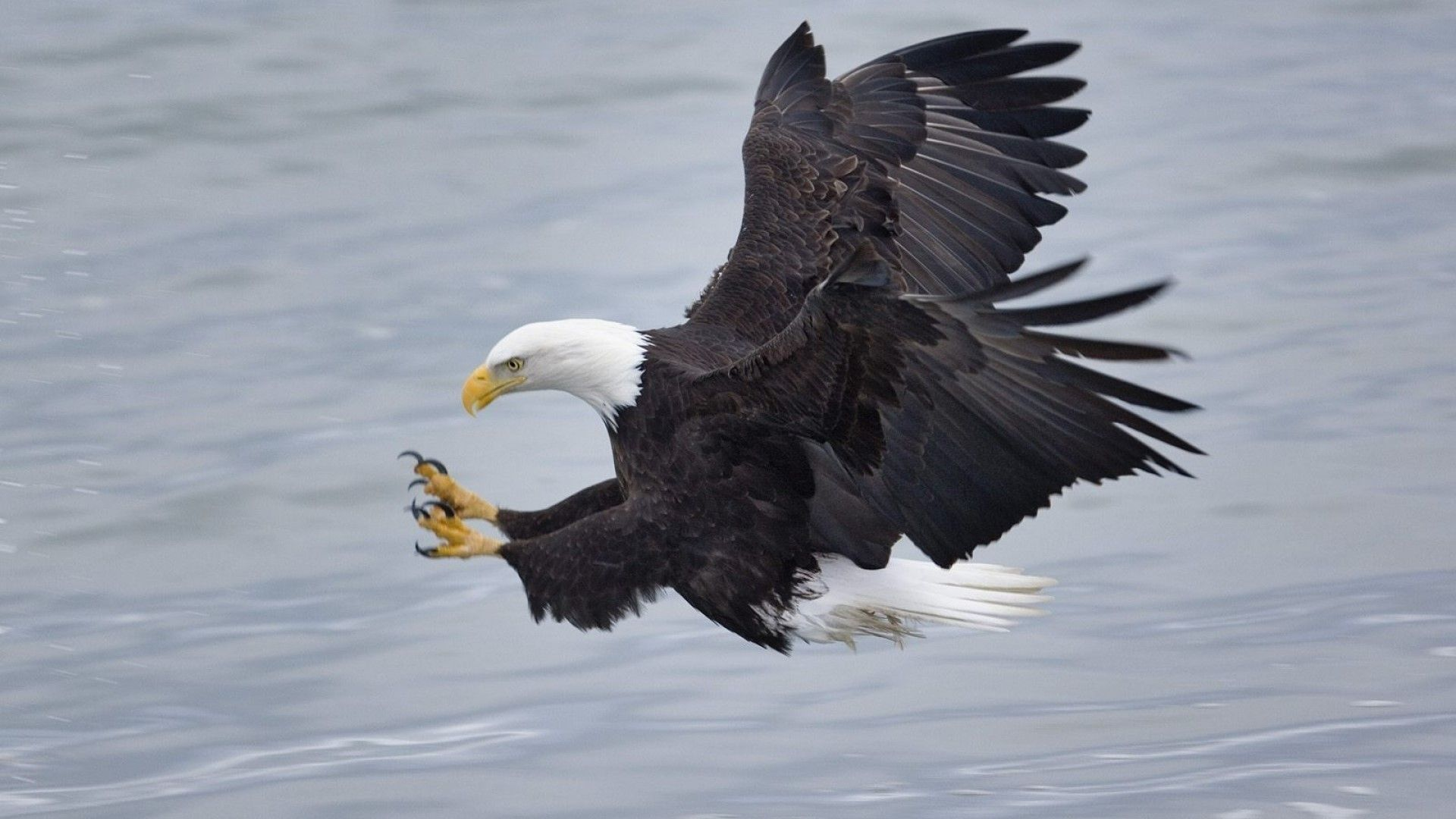 Bird Eagle Photo And Pictures