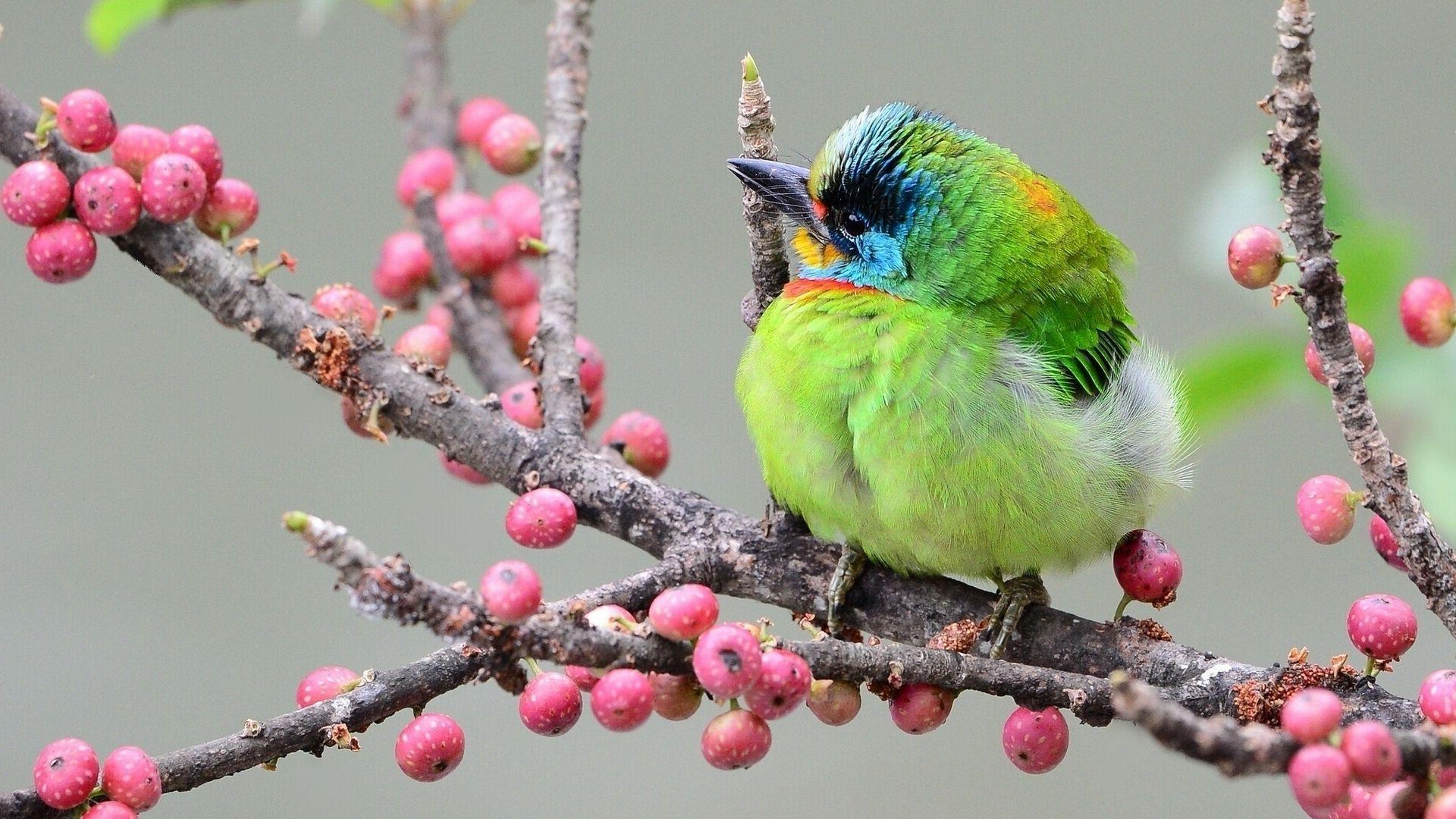 Bird On A Branch Wallpaper